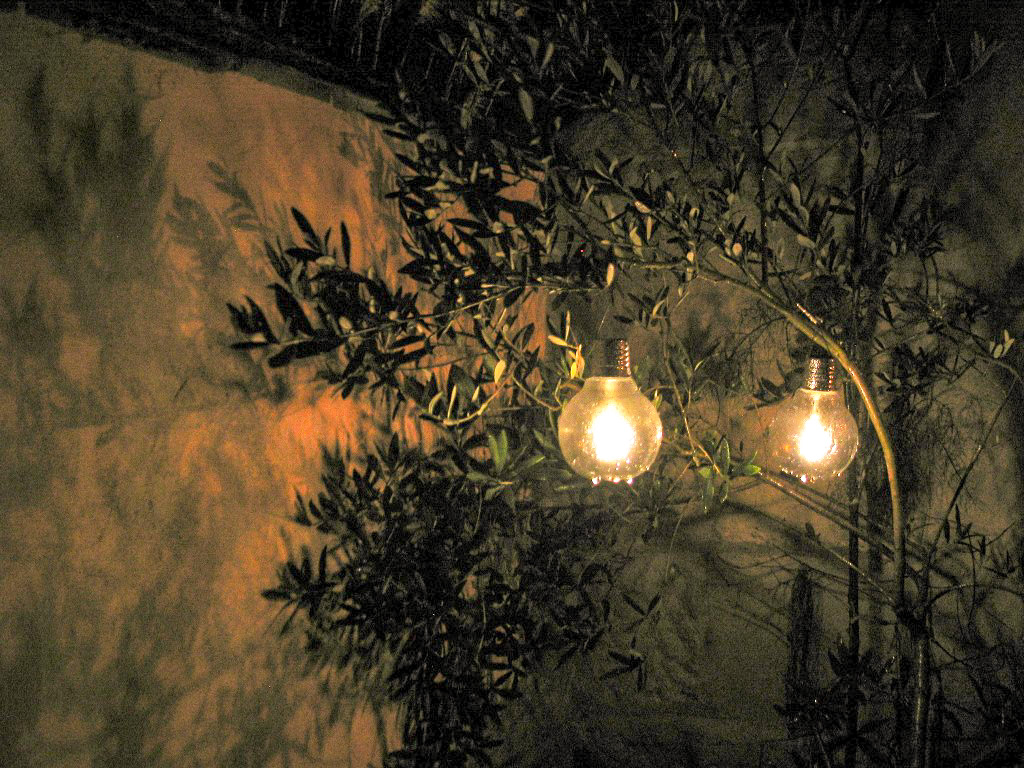 Solar lights hanging in an Olive tree - extending the garden season nto autumn