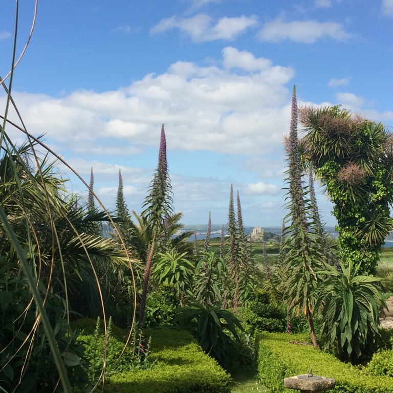 Sub tropical garden at Ednovean Farm overlooking St Michael's Mount