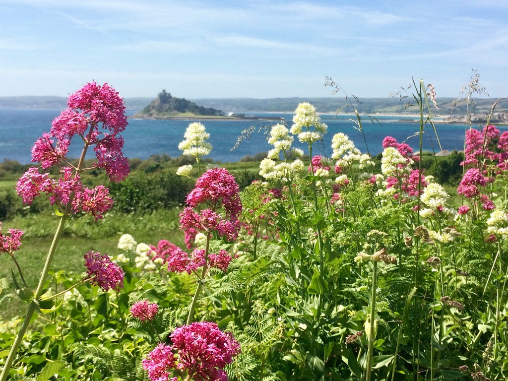 Walking to Marazion with wild flowers and lovely views to St Michael's Mount