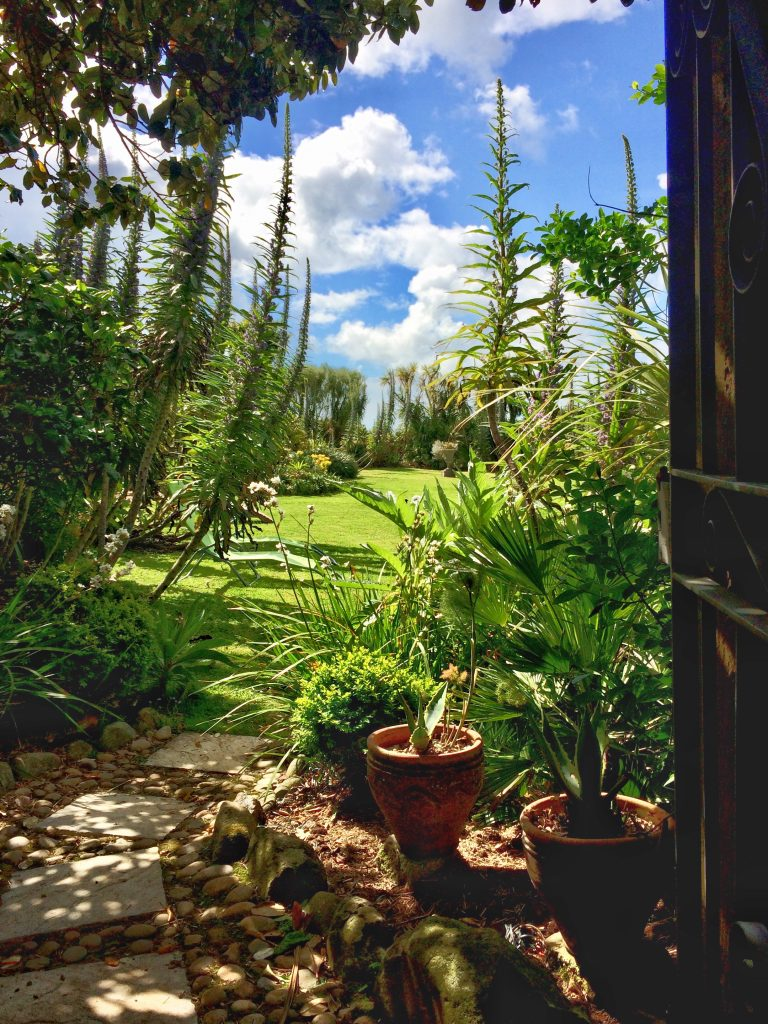 Gateway into summer - echiums framing a lawn at Ednovean Farm
