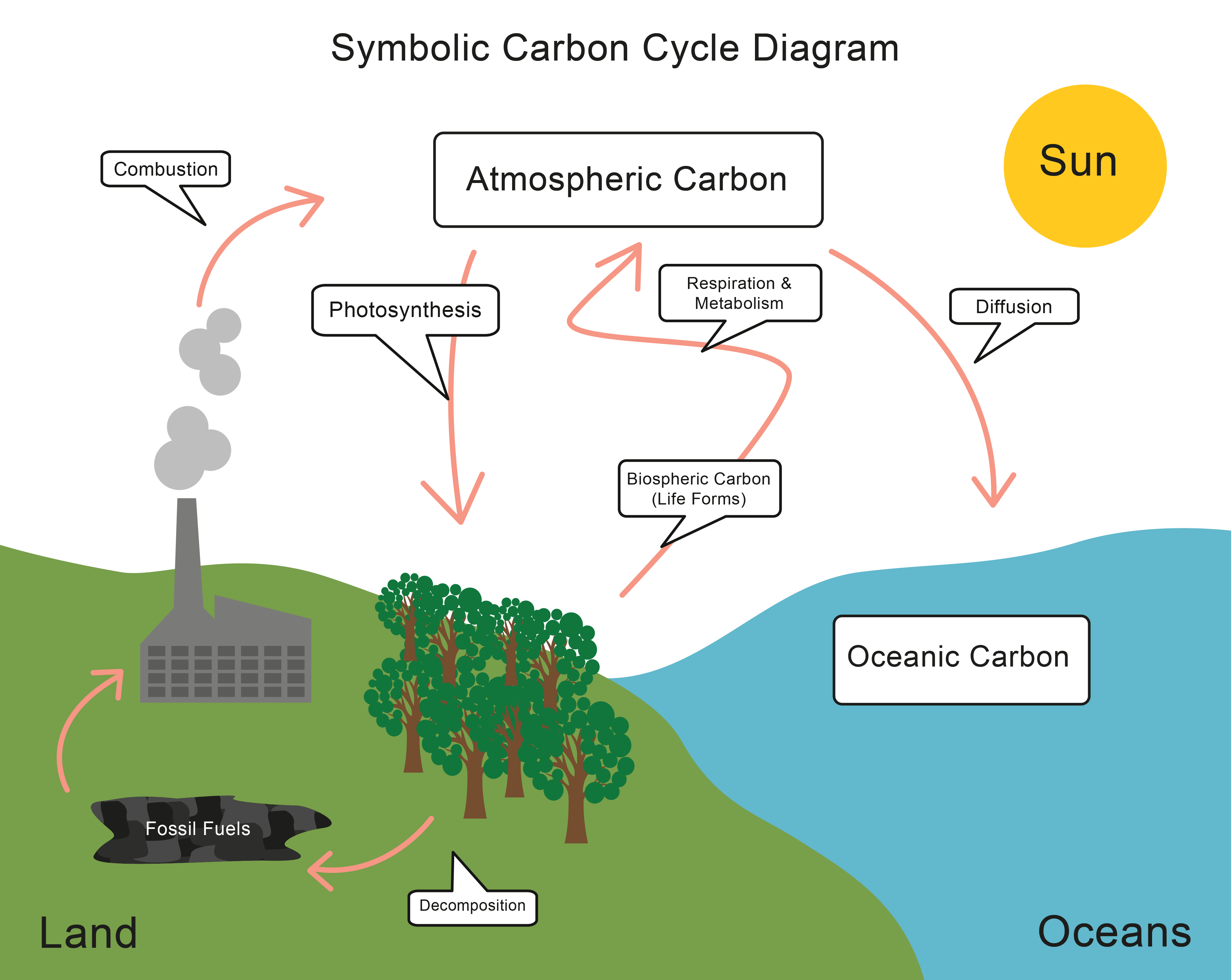 Energy Transfer And The Carbon Cycle
