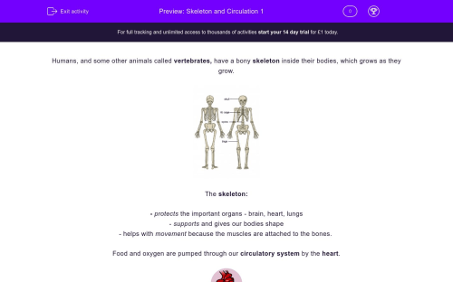 small resolution of  skeleton and circulation 1 worksheet