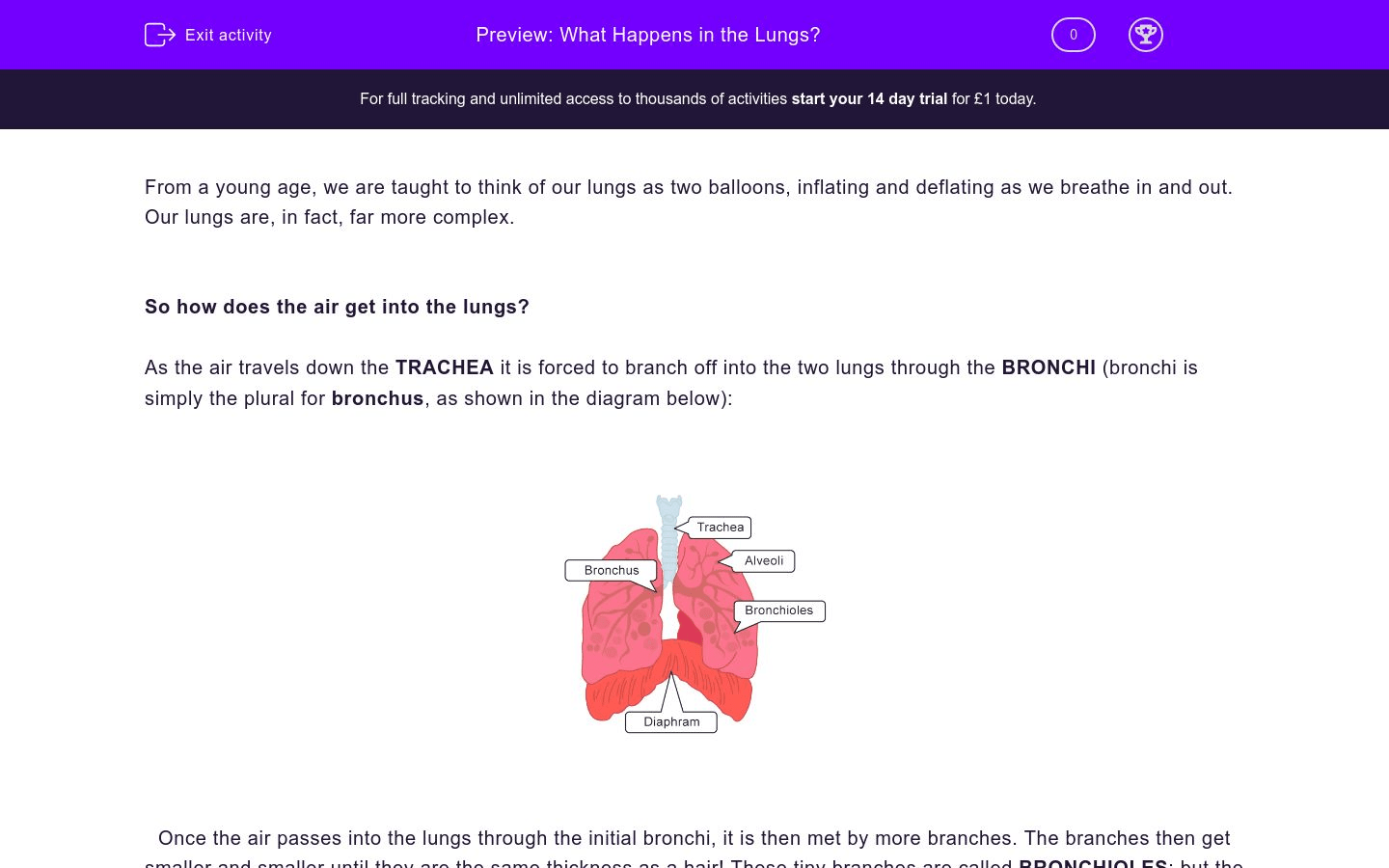 What Happens In The Lungs Worksheet