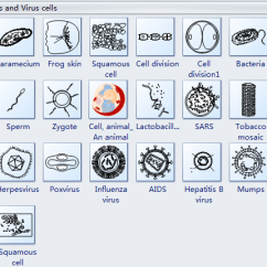 Plant Cell Diagram Black And White Nissan Maxima Engine Cells Diagrams - Free Download Software