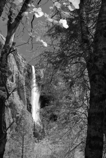 Bridalveil Falls and Dogwood
