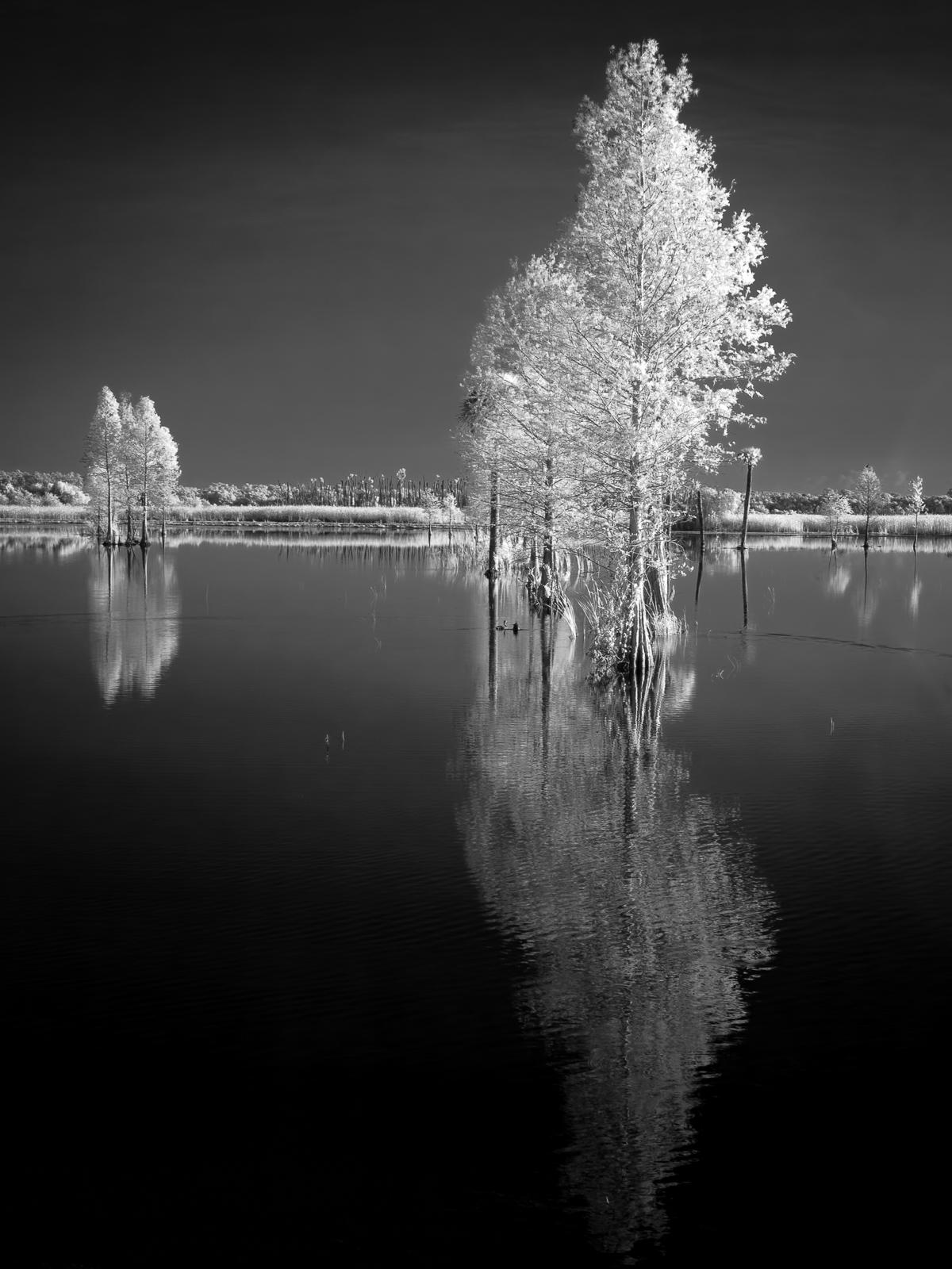 Trees at Dawn - Orlando Wetlands