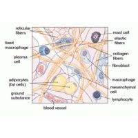 Mast Cells, Ehlers-Danlos syndrome, and GI Disorders