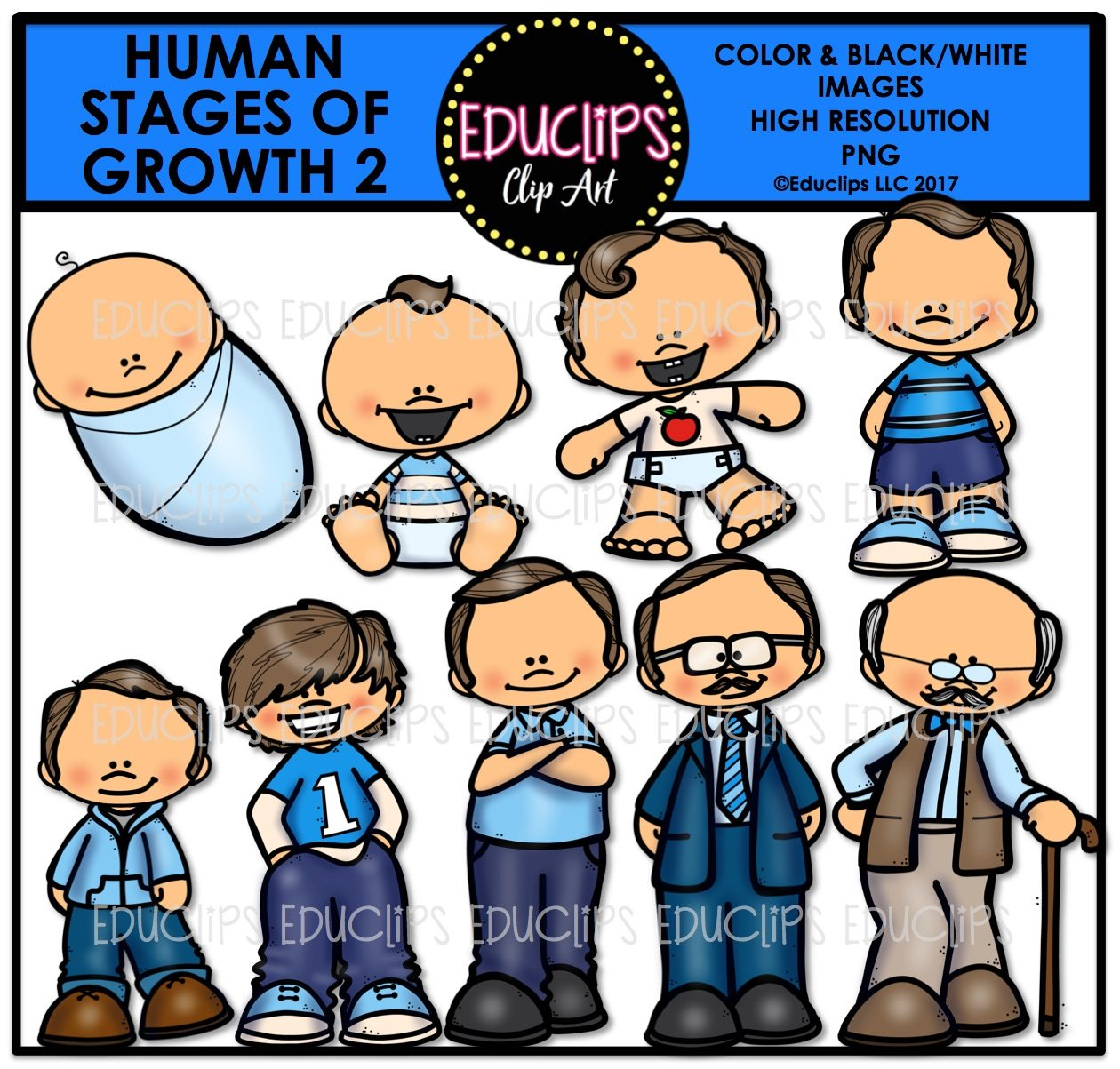 Human Stages Of Growth 2