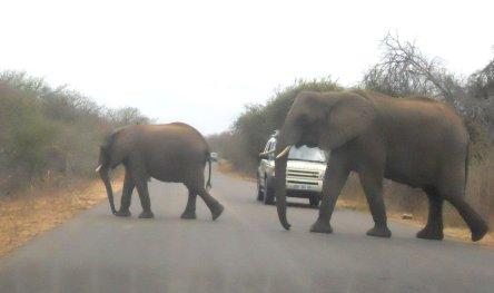 Kruger 6 ago 50