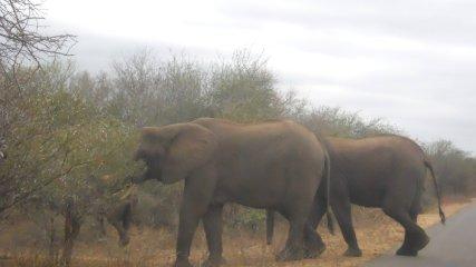 Kruger 6 ago 54