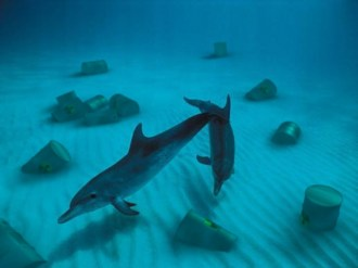 """Dolphins"" Study of realy photography and 3D integration"
