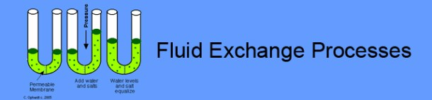 Fluid Exchange Processes