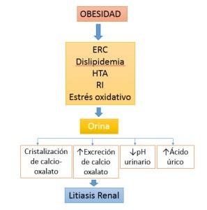 Ilustración 2. Relación Obesidad-Litiasis Renal