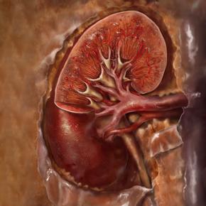 Importancia de la Evaluación Nutricional en la Enfermedad Renal Crónica Por: José Longo