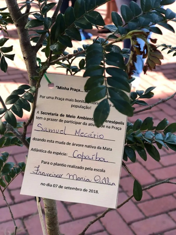Plantio de mudas na Praça Samuel Macário em Bonsucesso