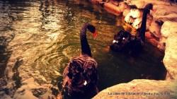 En el estanque encontramos diferentes aves