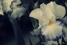 Flor V