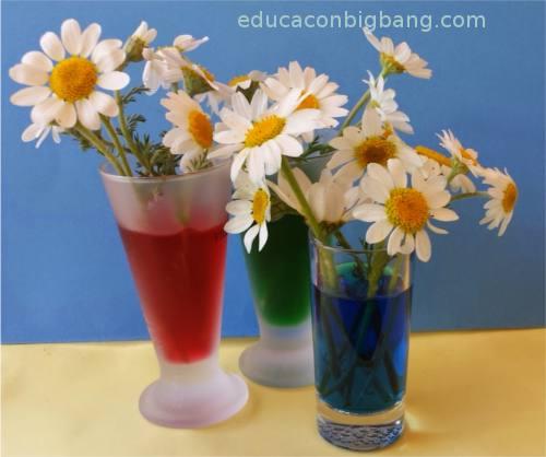 Flores en vasitos con agua coloreada