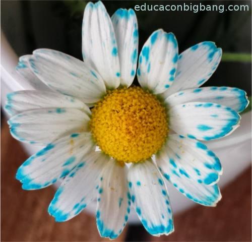 Flor con pétalos coloreados