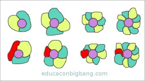 flores coloreadas con pétalos pares e impares