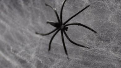 desacerse de las arañas en casa