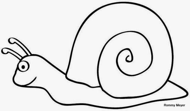 Imgenes y Dibujos de caracoles para colorear  Material para