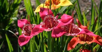 Aprende sobre plantas nativas de México