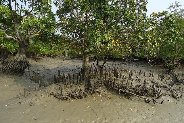 imagenes de manglares del ecuador como cuidar los manglares del ecuador