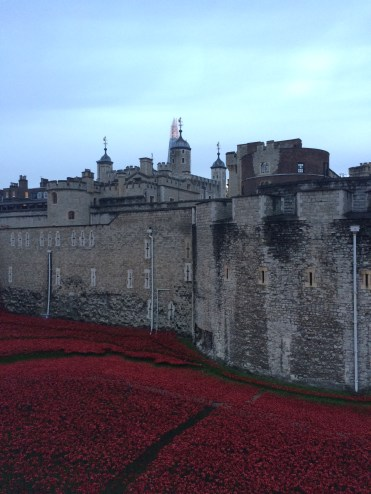 Poppies filling the moat at The Tower - November 2014, commemorating those that died in the First World War