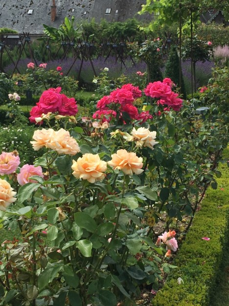 Roses at Chateau Bourdalaisiere