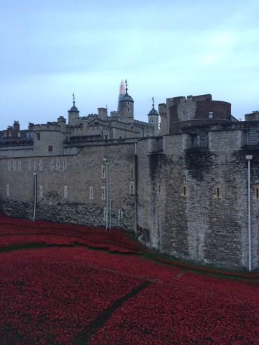 Tower of London - Poppy Installation