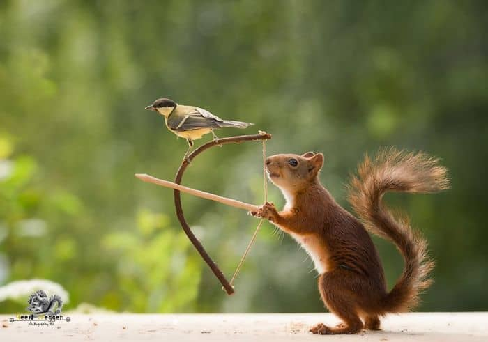 A squirrel with a bow and arrow