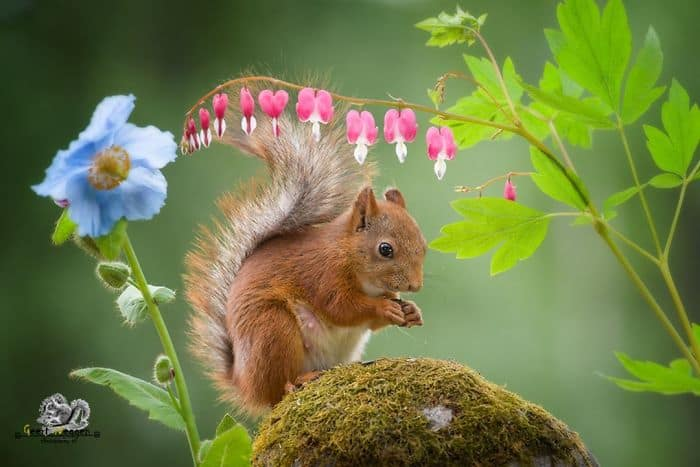A squirrel among flowers