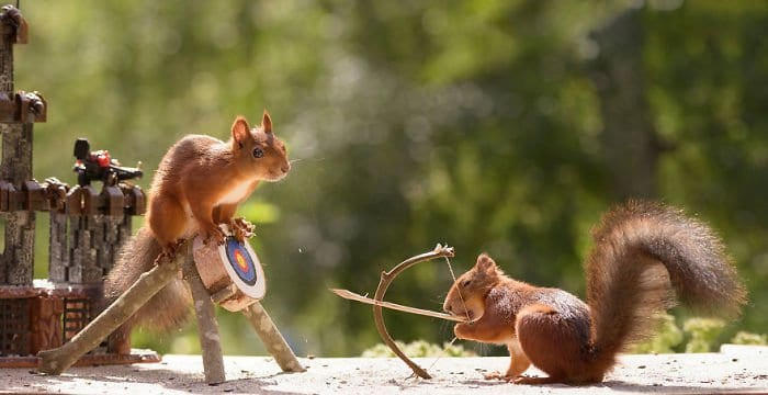 Squirrels with a bow and arrow and a target