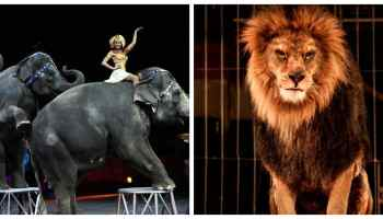 Bill to Ban Circus Animal Suffering Set for US Congress