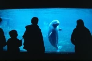 Deschooling - field trip to the aquarium