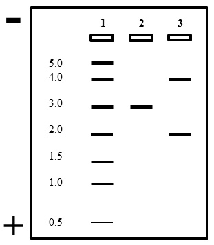 AP Biology: Basic Molecular Biology Laboratory Techniques
