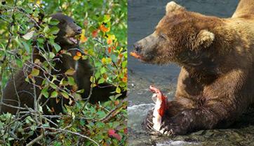 Omnivores Definition Examples & Quiz Study Com