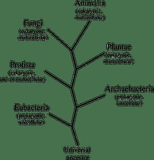Animalia Kingdom: Definition, Characteristics & Facts