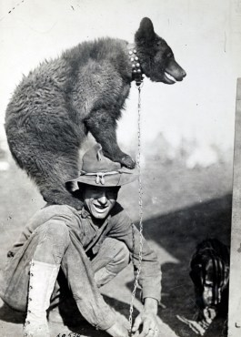 Bear on Soldier's Shoulders
