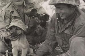 Dogging The Communists photo