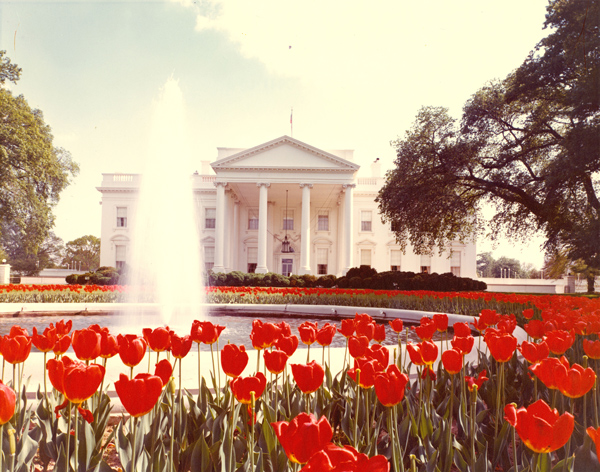 White House with fountain and tulips in foreground