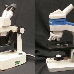 Dissecting Microscope Diagram Frog Anatomy Digestive System Of Incubator