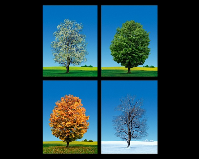 Make a Poster Showing What Trees Look Like in All Four Seasons.