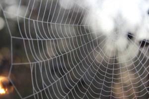 Spider web-google post
