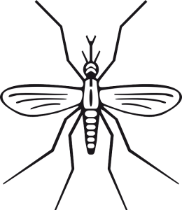 insect-158565_640