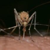 160321 mosquito