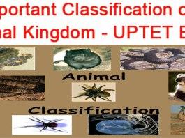 Classification of Animal Kingdom