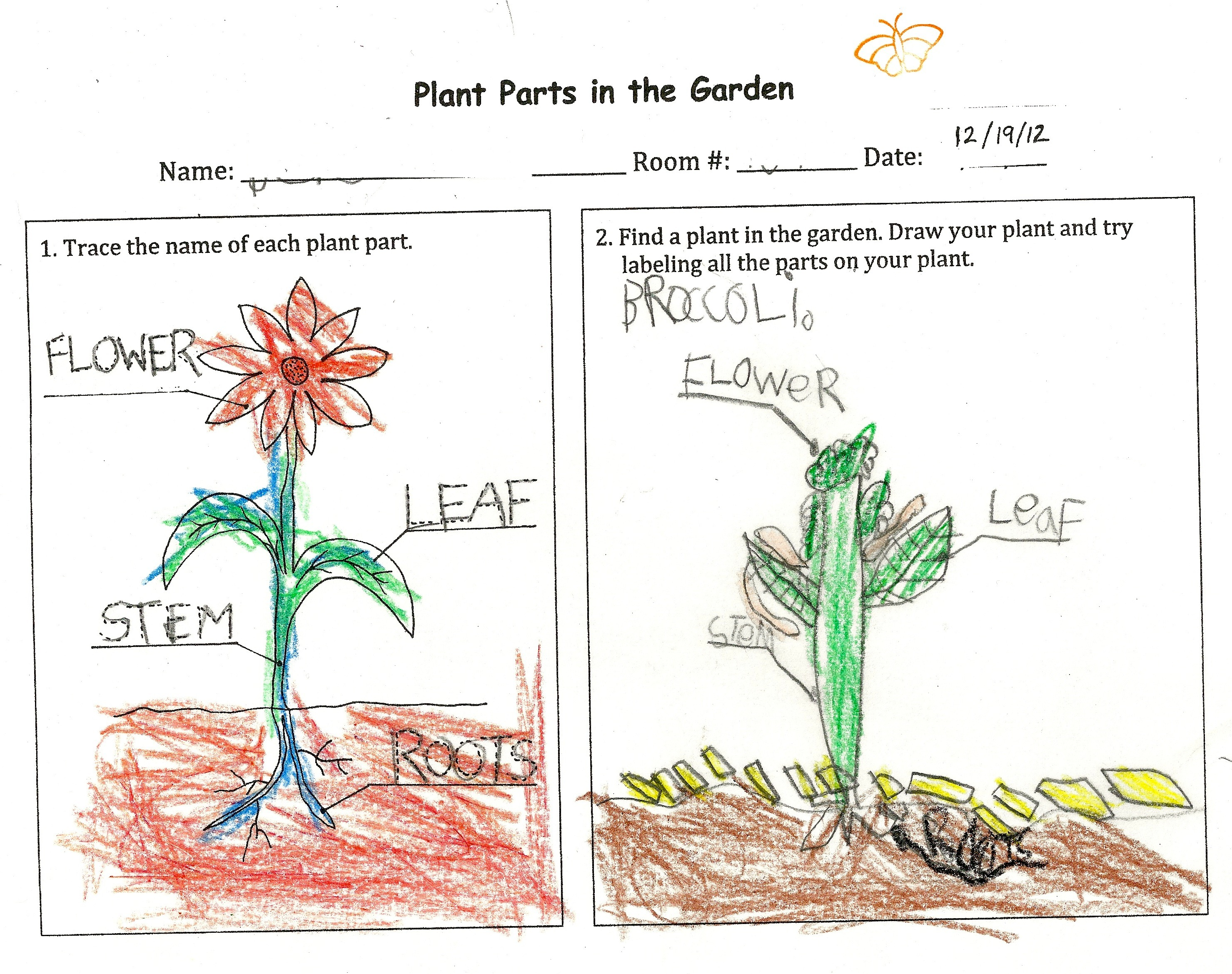 Plant Parts With Kindergarteners
