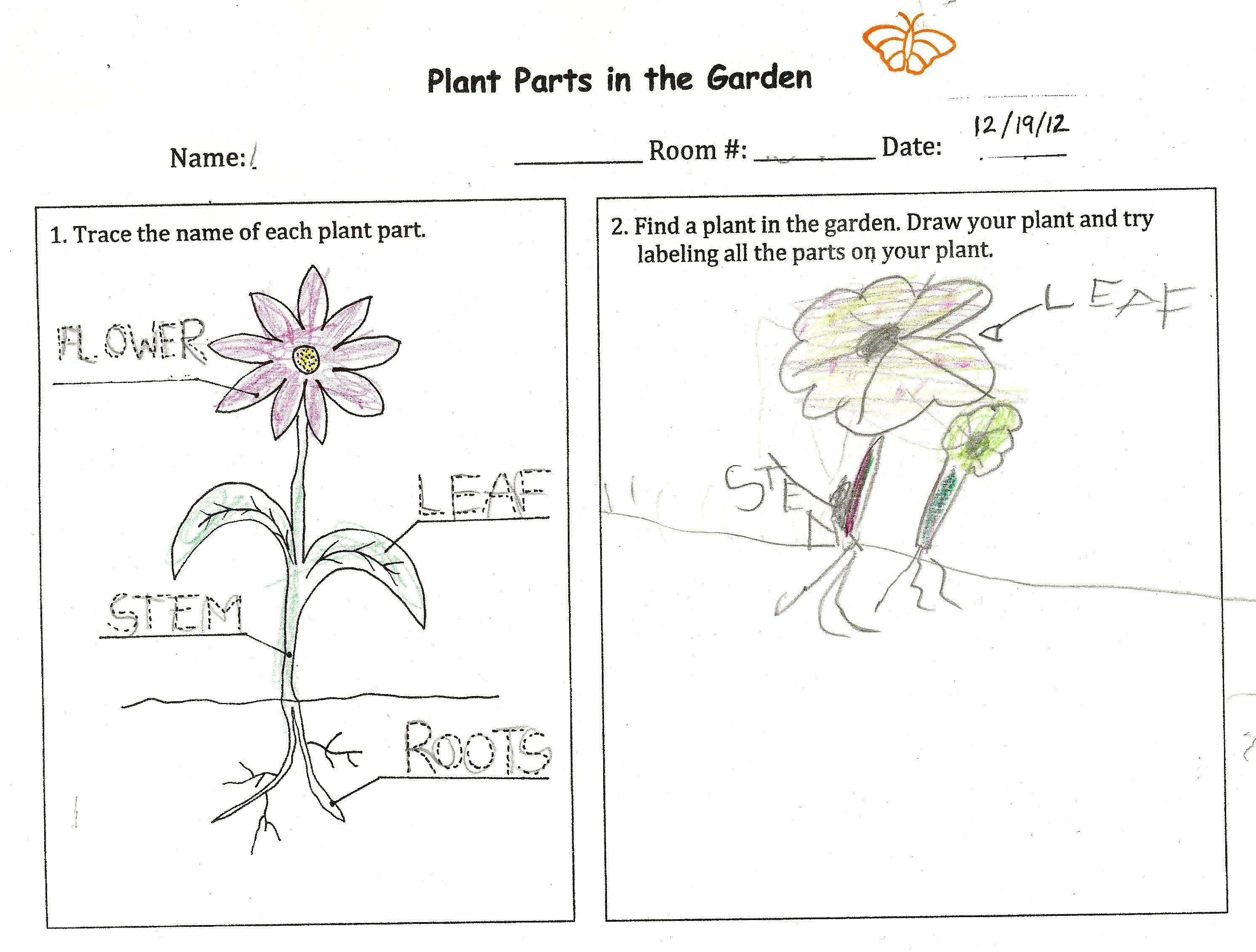 Stem Plants Worksheet